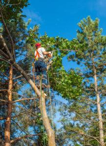 tree service avon park florida